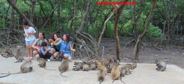 giới thiệu về lịch sử Đảo Khỉ Cần Giờ