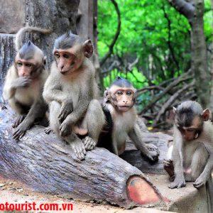 Vé đi đảo khỉ Cần Giờ