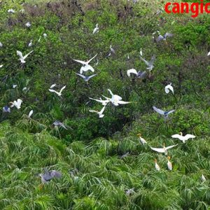 Khám phá mùa chim làm tổ