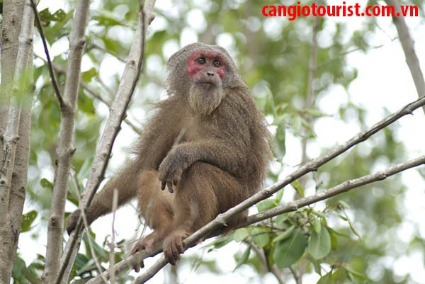 Tour Đảo Khỉ Cần Giờ 1 Ngày