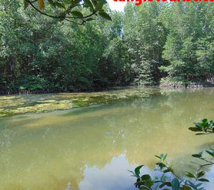 Chương trình Tour học sinh 1 ngày tham quan Rừng Ngập Mặn Cần Giờ